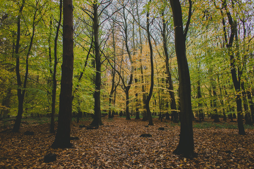 Hitchwood in Autumn