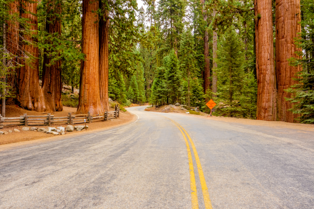 Giant Sequoia National Monument -