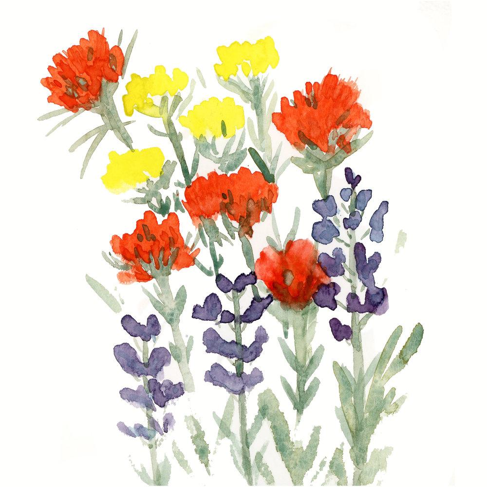 wildflowers001.jpg