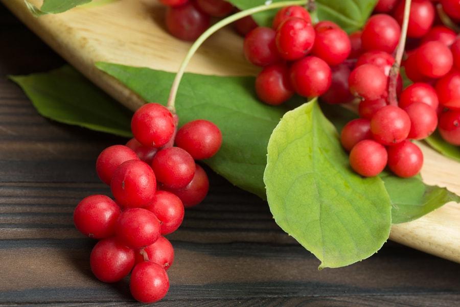 shizandra berry.jpg