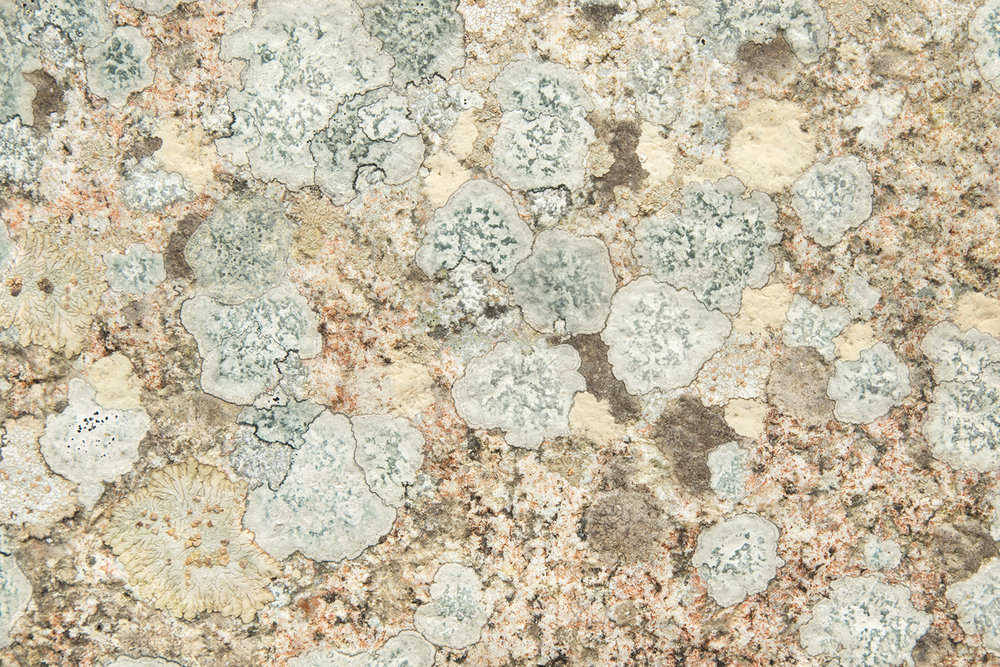 Wallpaper lichen