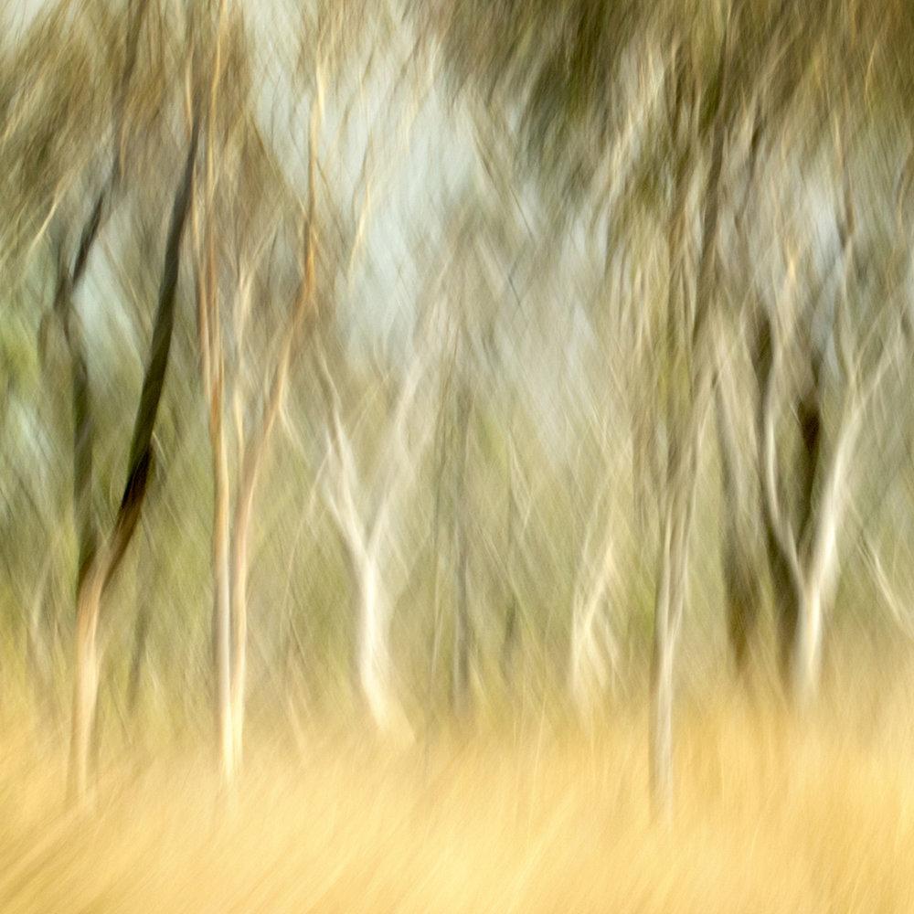 Outback II
