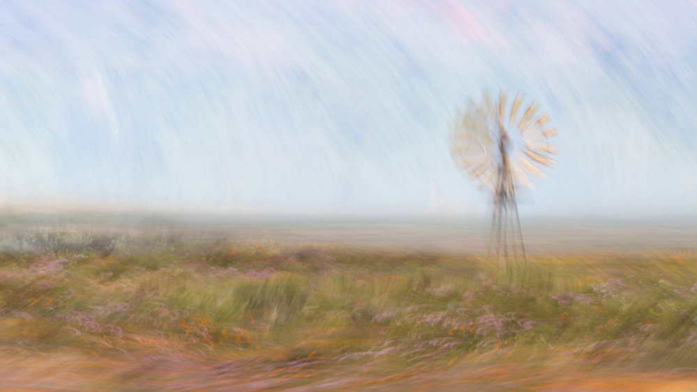 Windmill in the Wildflowers