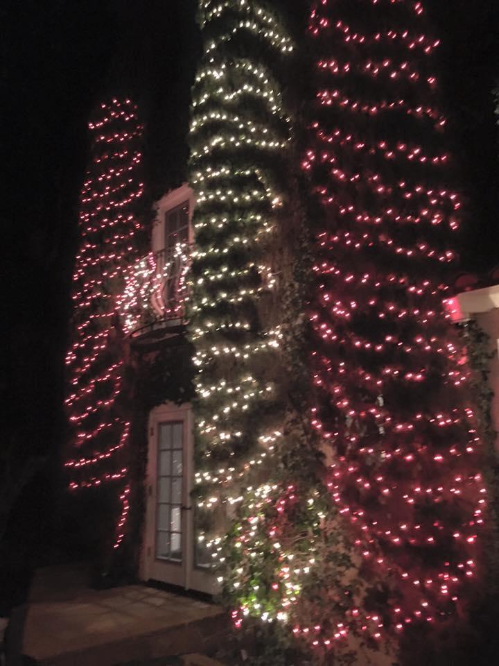 Lights on Trees.jpg