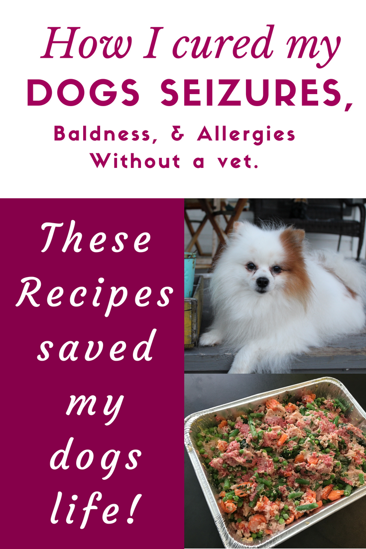 I'm so glad that I trusted my gut and didn't start him on medicine for epilepsy. These Dog food recipes absolutely saved his life.
