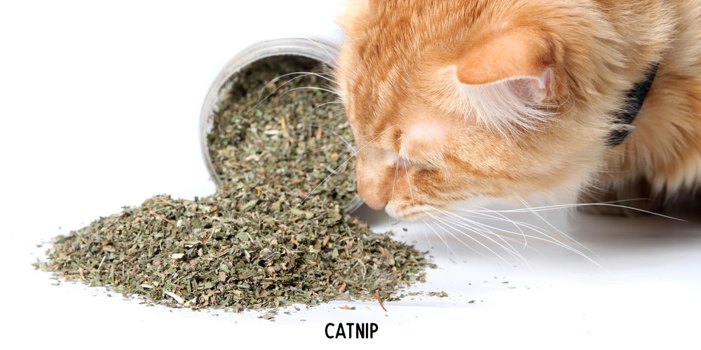 Pet Craft Supply Premium Potent Catnip - Usa Grown And Harvested