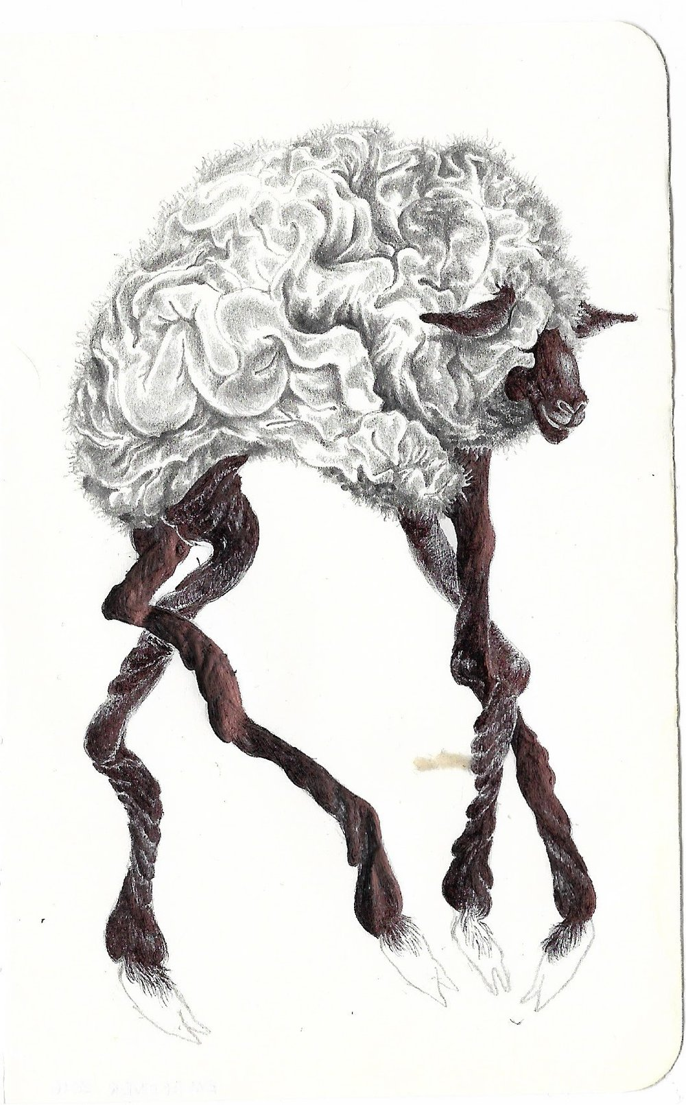 dancing sheep (2)