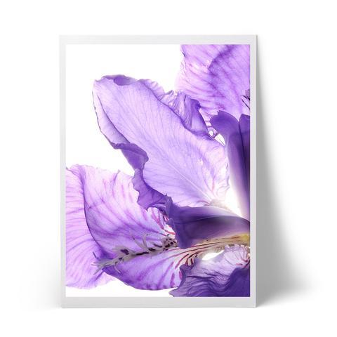 Iris_large.jpg