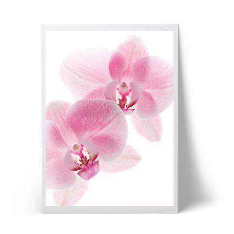 orchide_large.jpg