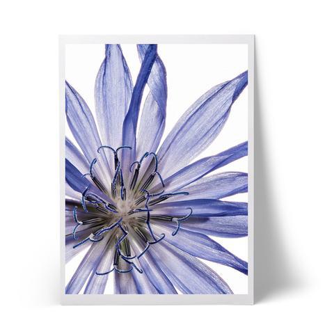 blueflower_large.jpg
