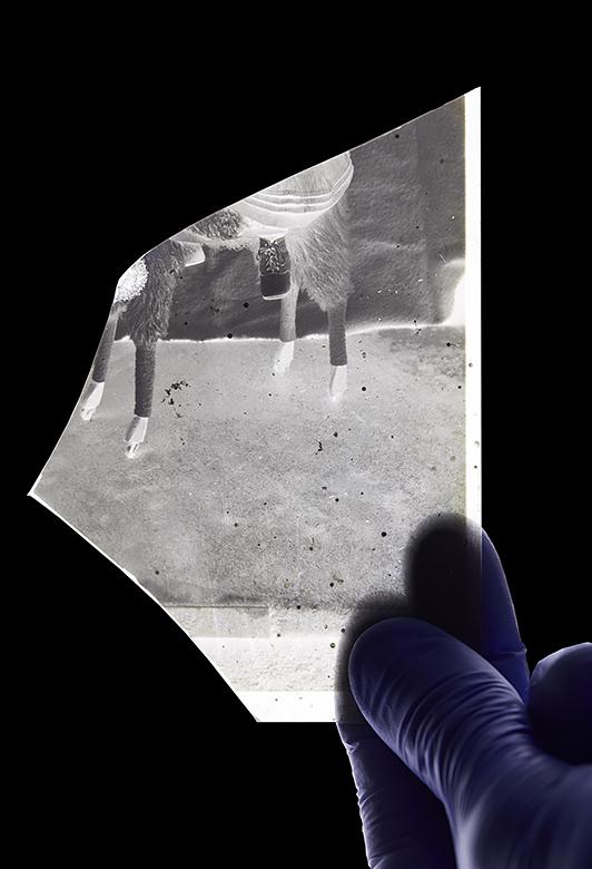 - Numérisation et traitement d'un négatif au gélatino-bromure d'argent sur plaque de verre brisée de 13x18 cm, datant de 1899
