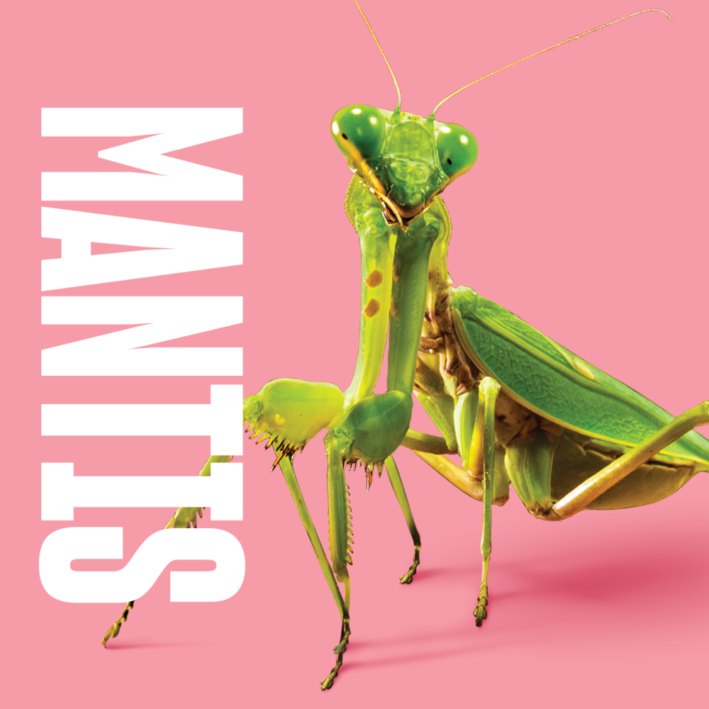 Animal inspiration Mantis.png