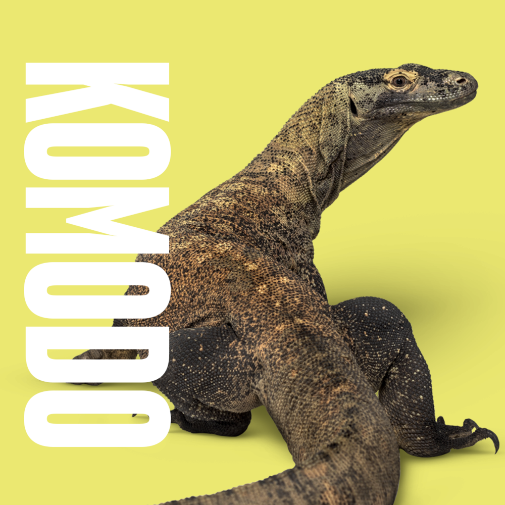 Animal inspiration Komodo.png