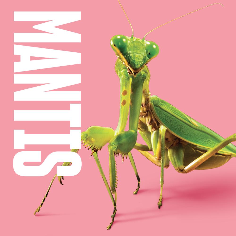 Animal inspiration Mantis.png