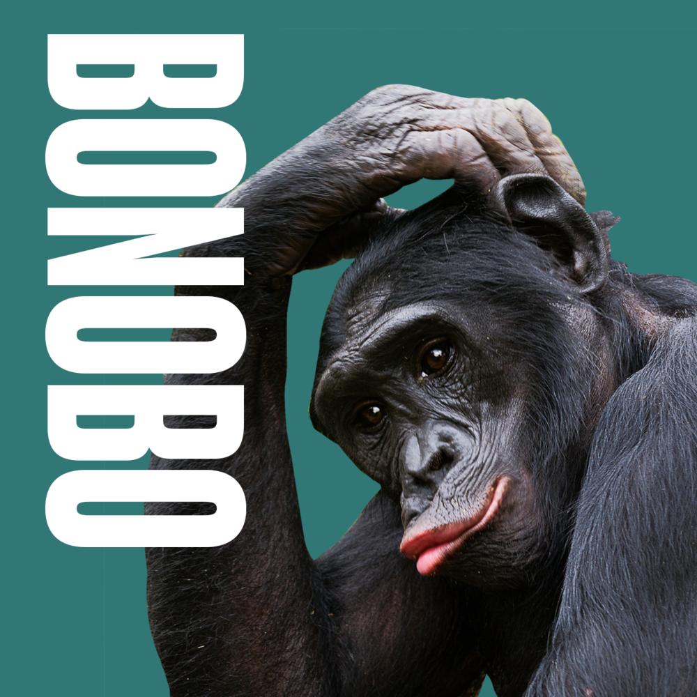 Animal inspiration Bonobo.png
