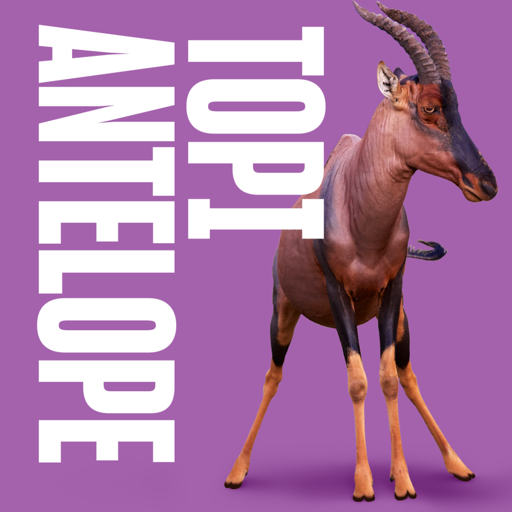 Topi Antelop inspiration animal copy.png