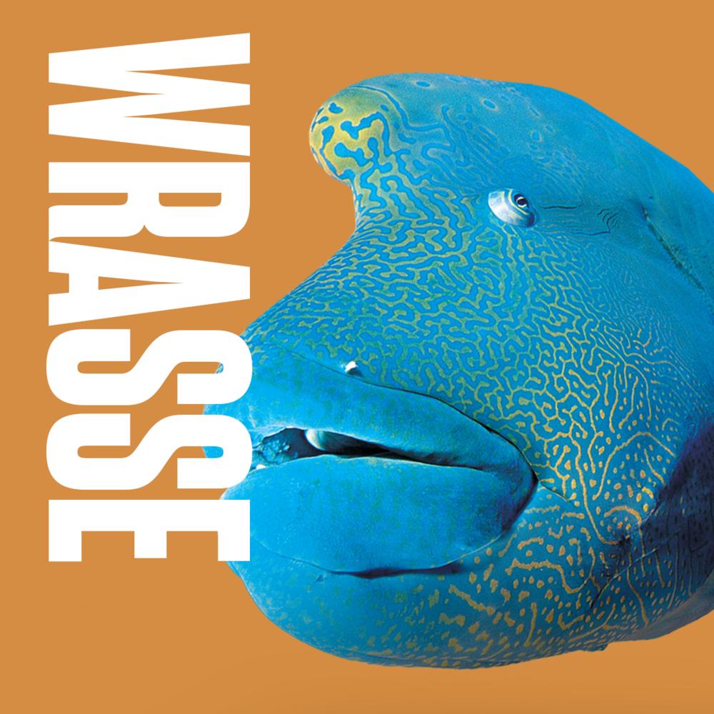 Animal inspiration Wrasse Fish.png