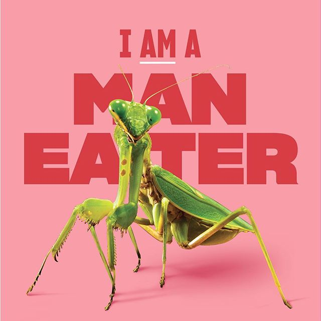 The female praying mantis devours her mate after copulation. 🍔 Celebrate the diversity of female sexuality. Celebrate  #RawrrrWomen. . . . #hungry #ravenous #femanist #sorrynotsorry #sex #sexuality  #yournotyouwhenyourhungry #snickers #nom #yummy #prayingmantis #animals #animalkingdom