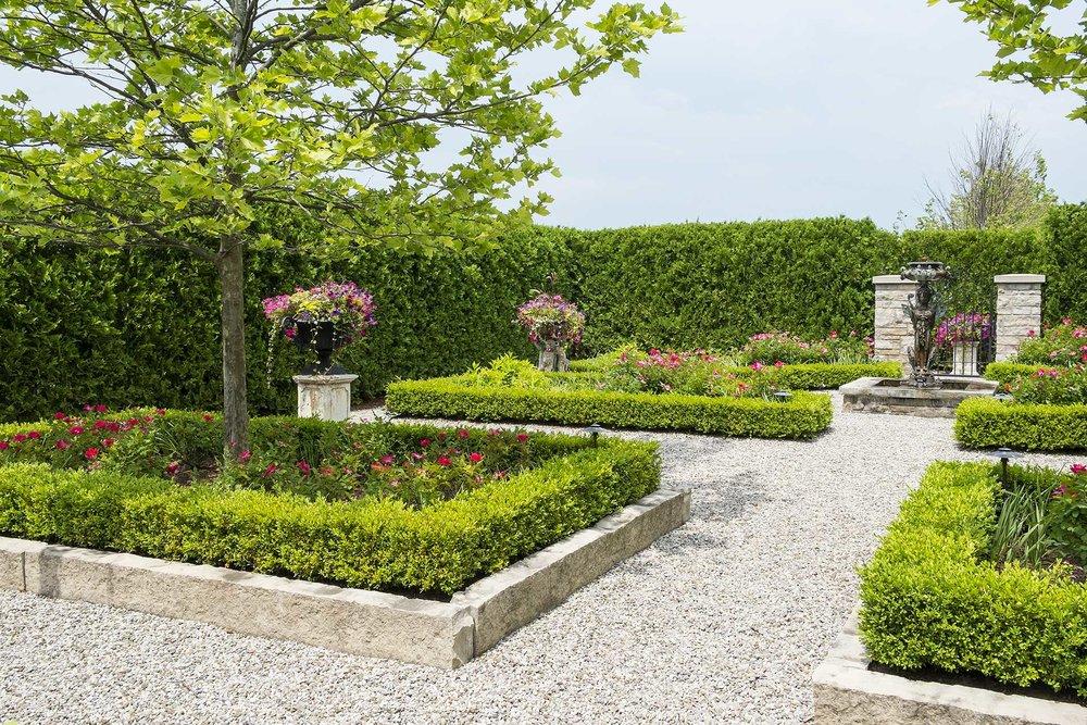 Buxus thuja occidentalis park formal estate