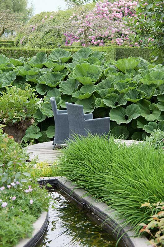 Thuja arborvitae hedge formal water garden modern
