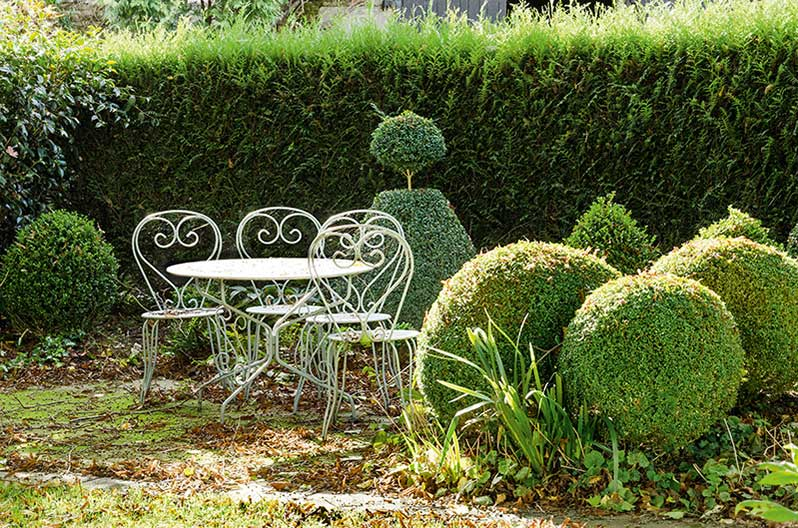 Thuja Virescens hedge cottage country