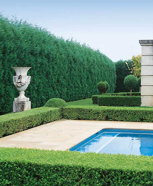 Buxus Thuja occidentalis formal pool estate