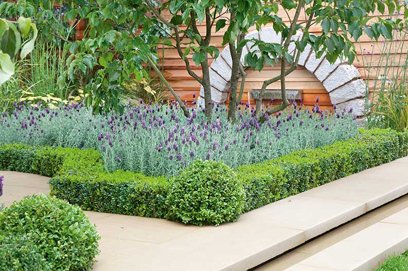 Buxus courtyard suburban urban border