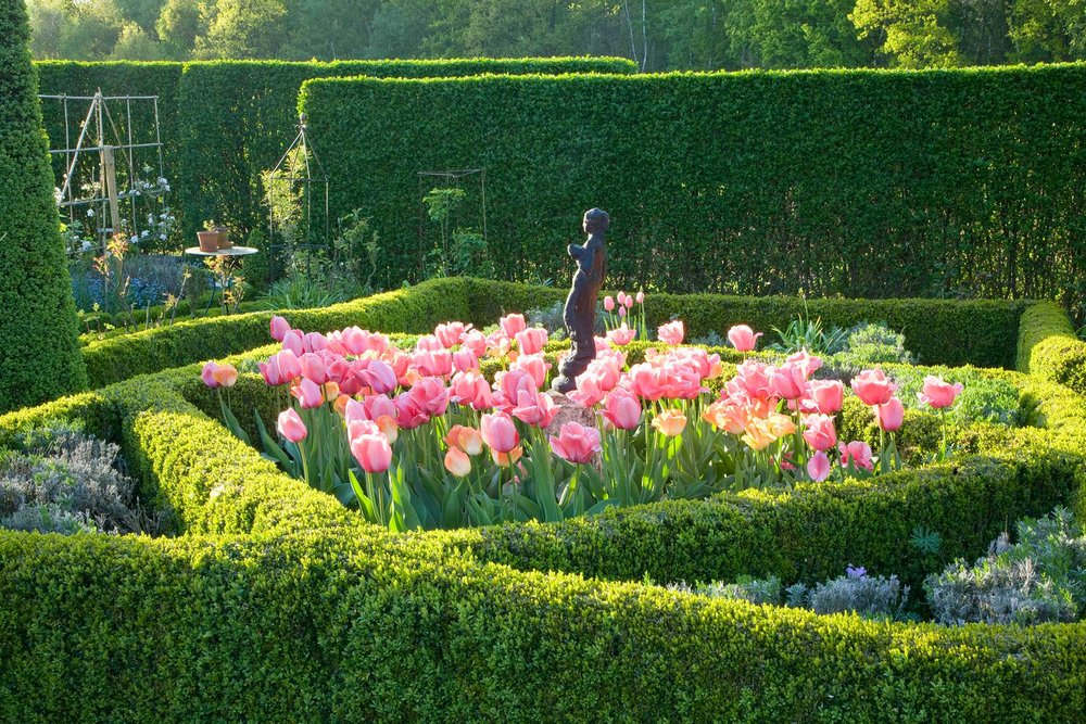 Buxus boxwood hedge formal knot garden
