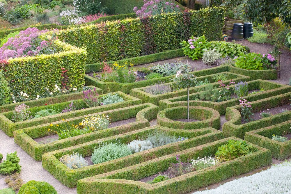 Buxus boxwood Fagus beech hedge formal garden