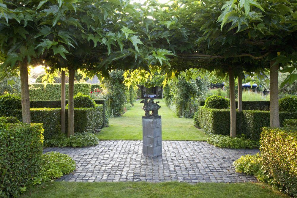 Prunus lusitanica Portuguese Laurel Hedge modern garden