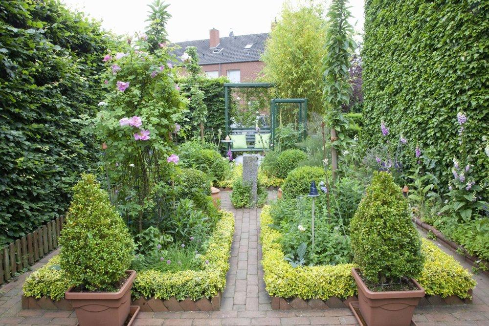 Fagus hedge beech urban city vegetable herb garden