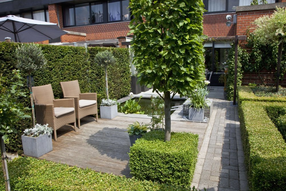Buxus boxwood Taxus yew hedge urban garden courtyard