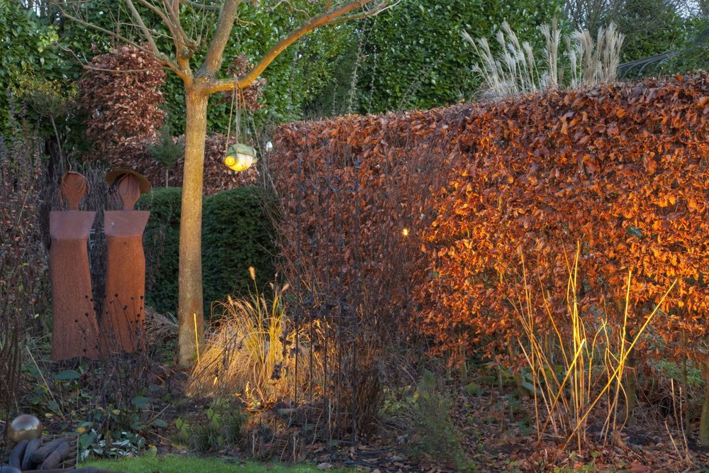 Fagus beech hedge modern fall winter leaf