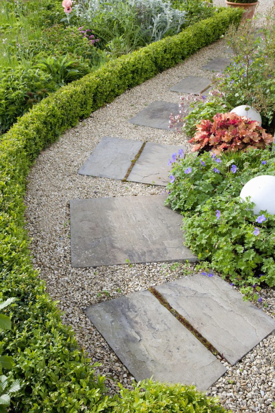 Boxwood Buxus hedge path garden border curving