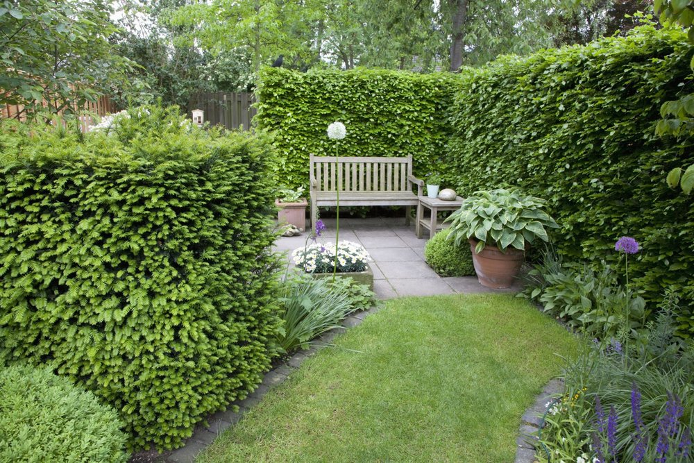 Taxus Fagus hedge yew beech country garden lawn frame InstantHedge