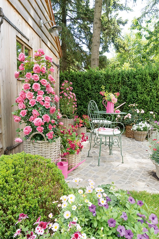 Taxus gardening estate cottage country patio flowers