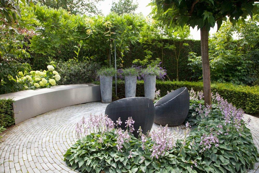 Taxus yew hedge modern garden