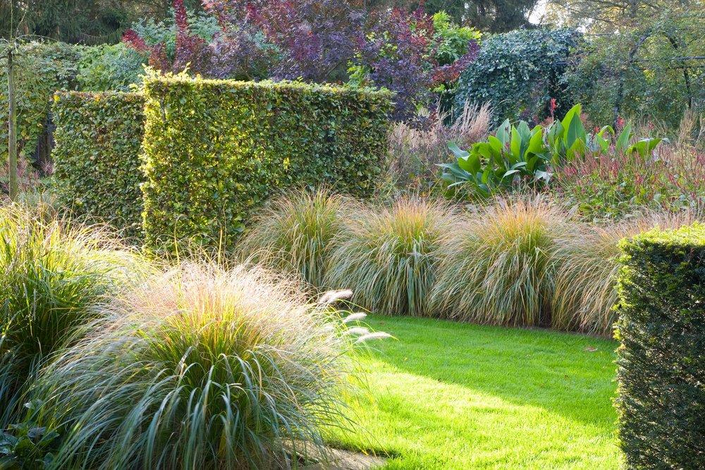 Fagus Taxus beech yew hedge garden