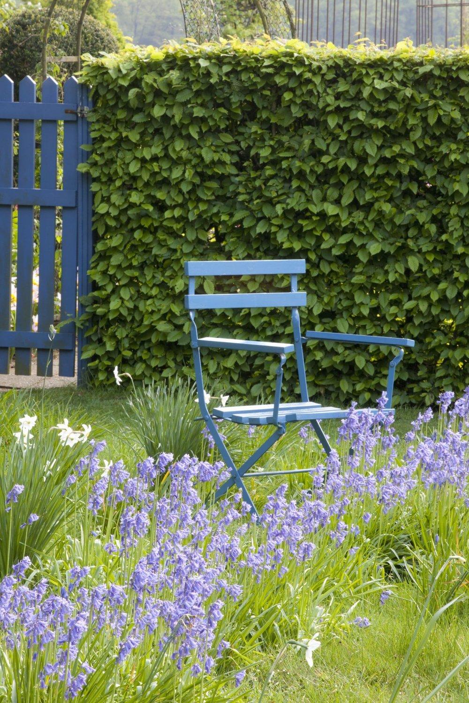 Carpinus hornbeam hedge country garden cottage