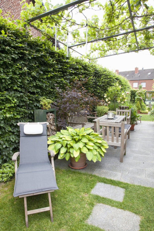 Fagus hedge beech urban patio outdoor room