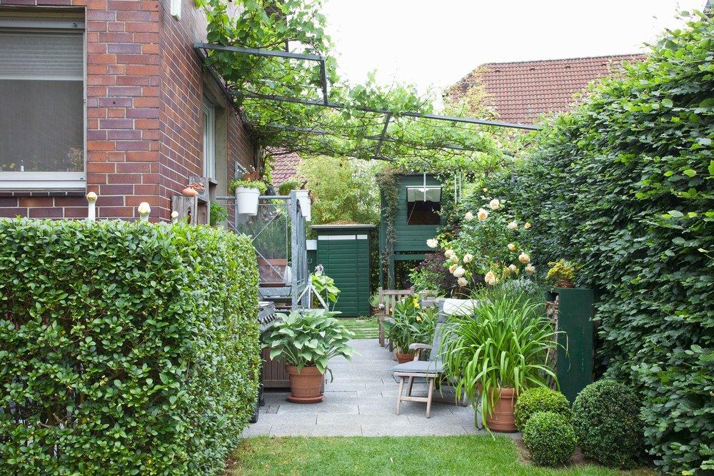 Fagus hedge beech urban outdoor room