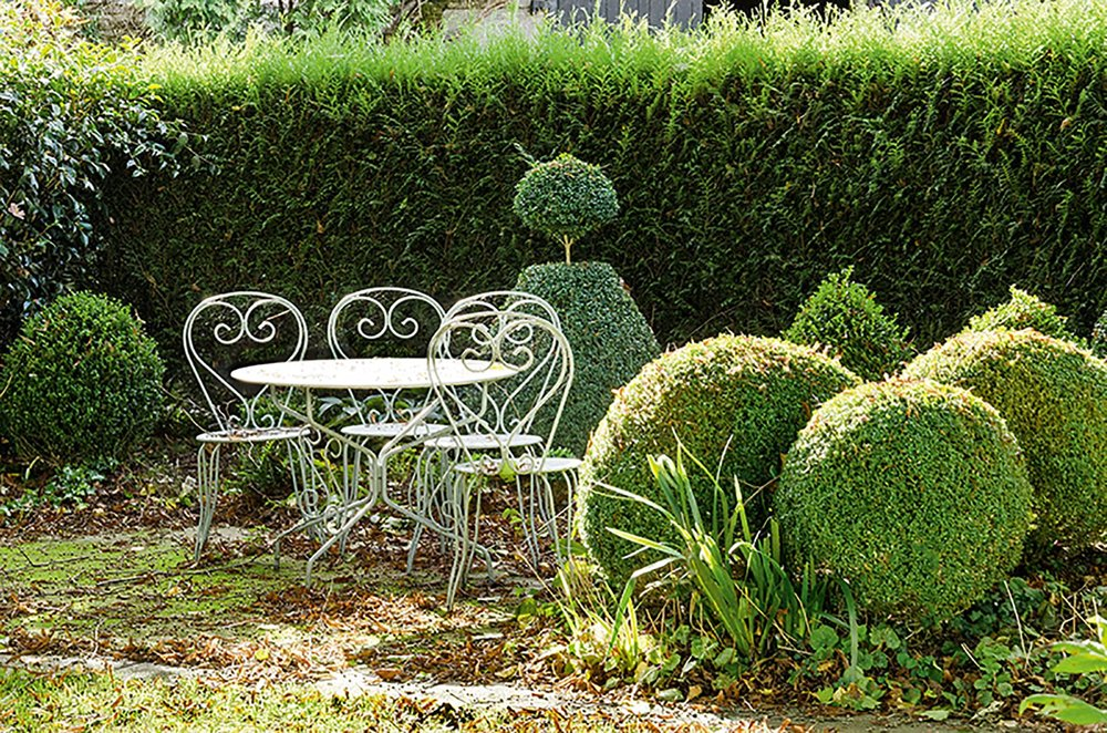 Thuja Virescens hedge cottage country bistro table