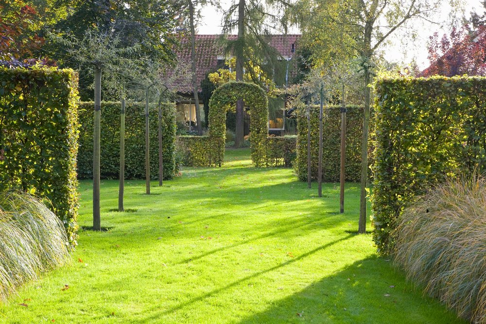 Fagus beech hedge formal garden estate sculpted arch hedge