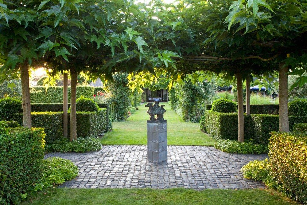 Prunus lusitanica Portuguese Laurel Hedge modern garden InstantHedge