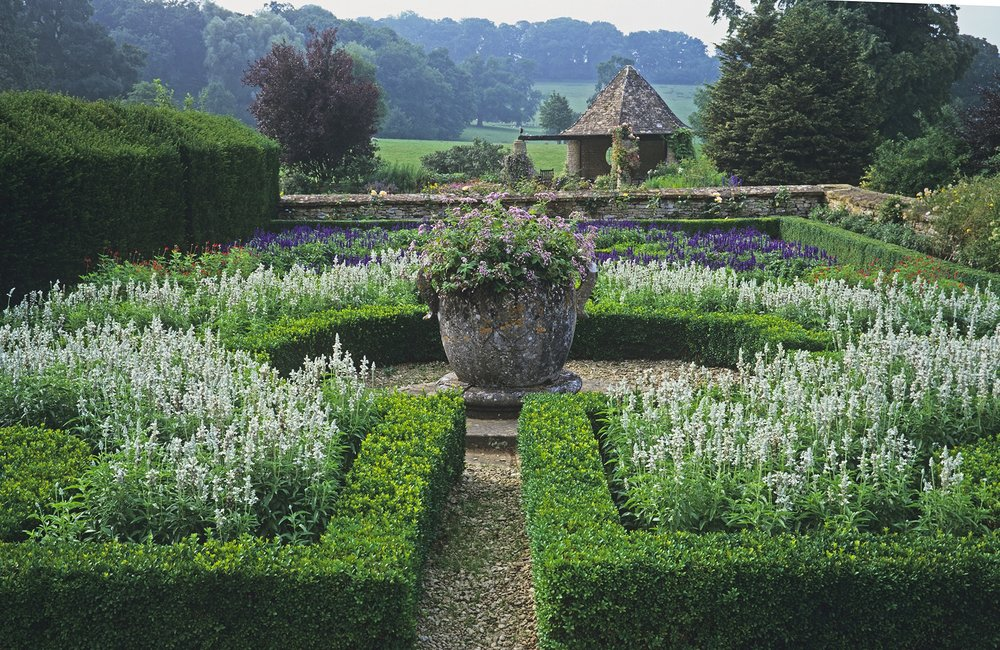 Buxus taxus estate country