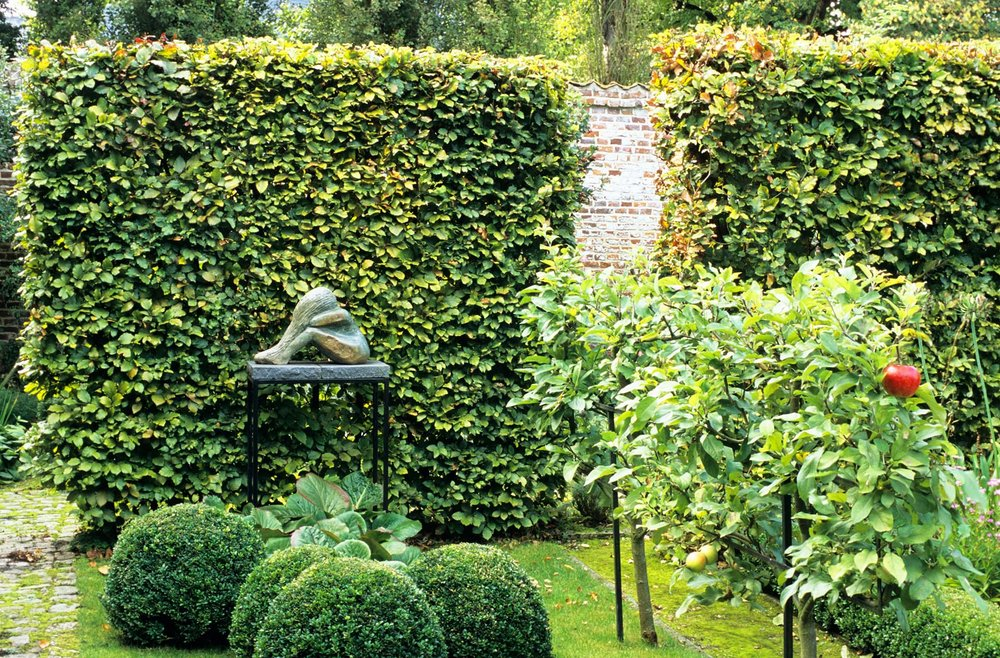Fagus beech modern garden hedge art display