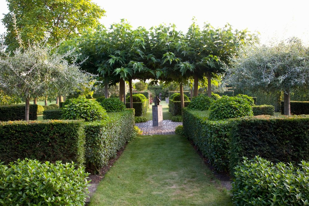 Taxus yew Prunus laurel hedge modern garden