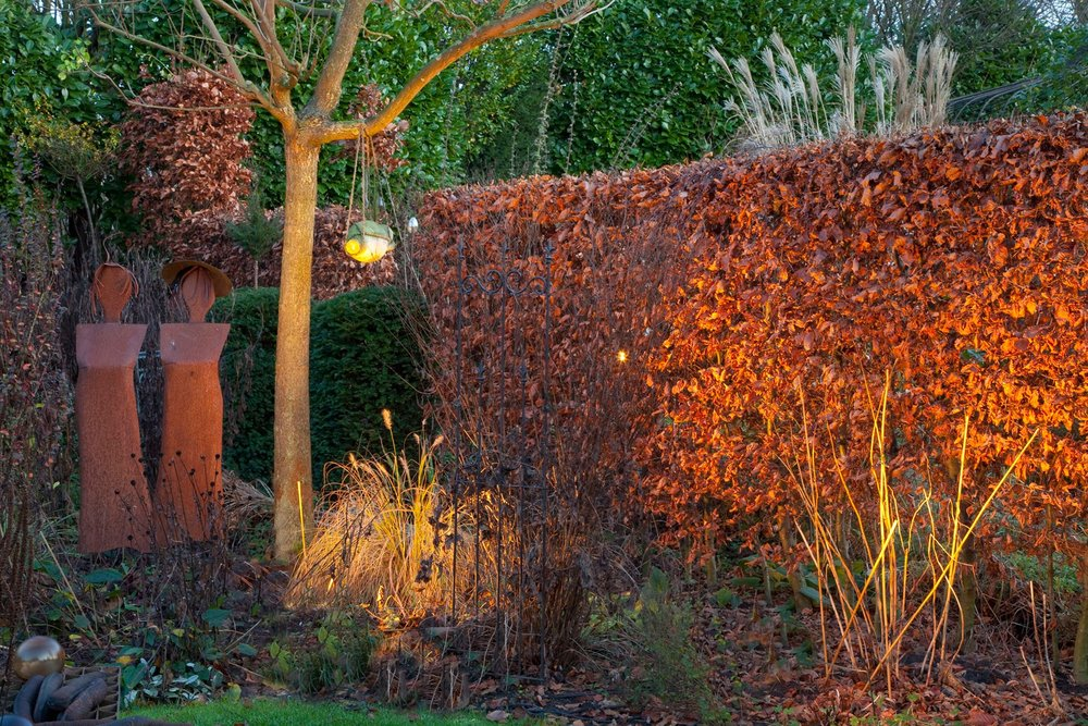 Fagus beech hedge modern fall leaf retention