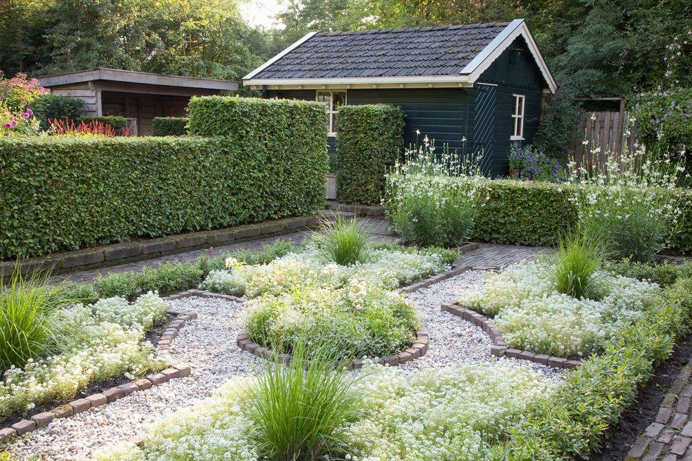 Fagus beech country garden urban courtyard