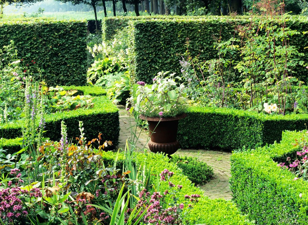 Buxus boxwood Fagus beech country garden hedge